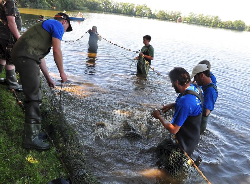 Im Land der Tausend Teiche wird traditionell abgefischt.